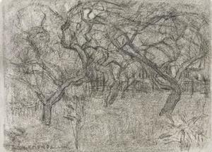 Orchard with enmeshed tree branches