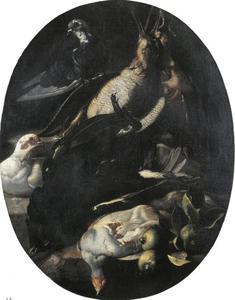 Levende en dode vogels
