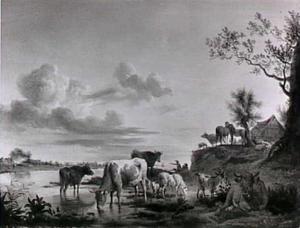 Koeien en ander vee drinkend aan de oever van een rivier