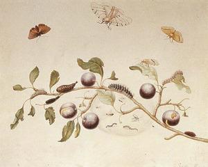 Tak met vruchten van de sleedoorn en verschillende metamorfosen