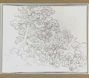 Landschap met loofbomen in de omgeving van Belmonte