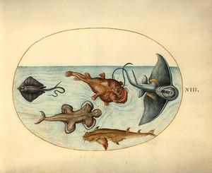 Zeeduivel, roggen en andere vissen