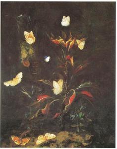 Bosgrond met vlinders rondom een plant