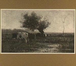 Weidelandschap met koeien