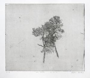 Studies van twee naaldbomen