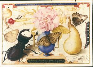 Studie van Bloemen, insecten en een peer opgedragen aan Johannes Radermacher