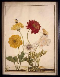 Drie tuinanemonen en een Perzische ranonkel met een heideblauwtje en een gehakkelde aurelia