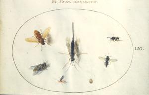 Zeven insecten waaronder muggen en een wesp