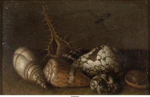 Stilleven met schelpen
