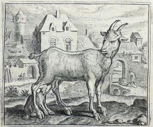 De fabel van de geit en de jonge wolf