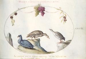Gans, eenachtige en duif [?] onder een guirlande van druiventrossen en lampionplanten