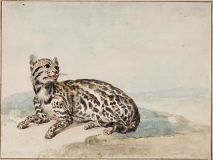 Surinaams tijgerkat (Leopardus tigrinus)