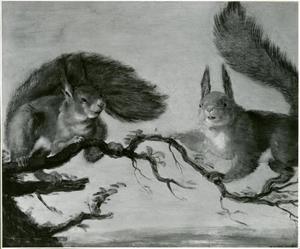 Twee eekhoorns