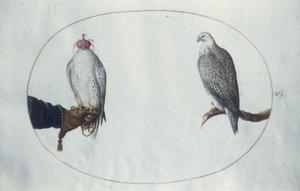 Twee roofvogels, waarvan een met huif op handschoen en ander op tak