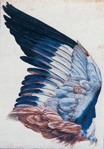 untitled/Study Dürer
