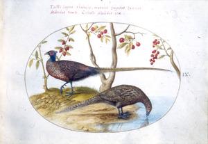 Twee fazanten (mannetje en vrouwtje), onder een kersenboom