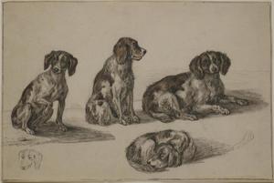 Studies van honden