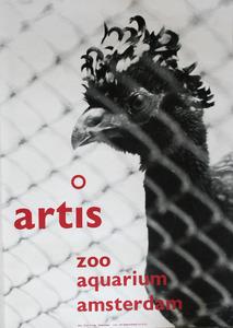 Artis-Affiche: 'Artis Zoo Aquarium Amsterdam' met Hokko