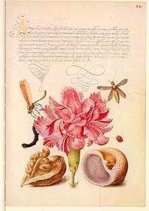 Tuinanjer, walnoot, schelp en vier insecten
