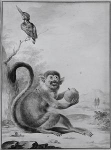 Doodshoofdaapje en ijsvogel