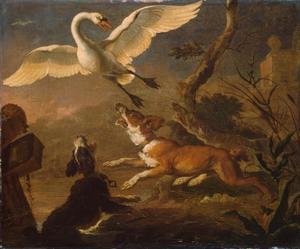 Honden jagen een zwaan van zijn nest
