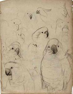 Schetsboekblad met schetsen van kaketoe's