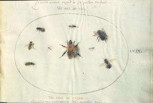 Negen insecten waaronder wespen en een hommel