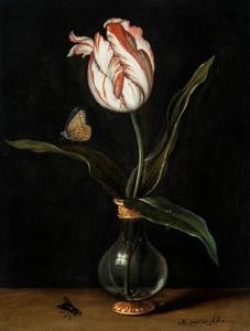 Studie van een tulp in een glazen vaas