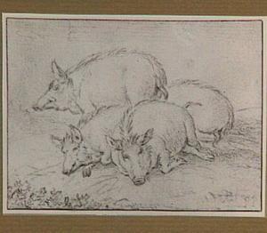 Groep varkens