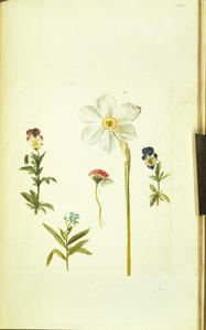 Vijf bloemen waaronder een narcis en twee driekleurige viooltjes