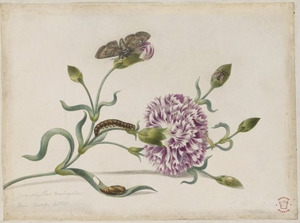Tuinanjer met metamorfose van een vlinder