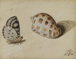 Bonte bessenvlinder en een grofgeribde mediterrane helmslak