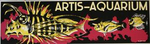 Artis-Aquarium-Tram-Affiche: 'Koraalduivel, Eenhoornvis'