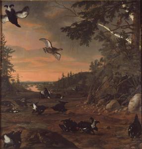 Zwarte hanen op de grond