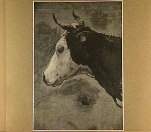 Kop van een koe