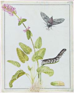 Betonieplant met cocon, rups en vlinder