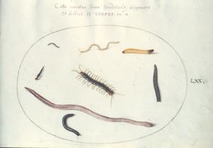 Zes wormen, waaronder een Regenworm, duizendpoot en miljoenpoot