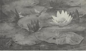 Libelles en waterlelies