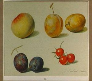 Perzik, pruimen en rozenbottels