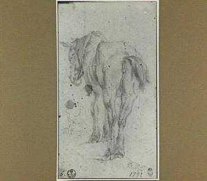 Paard, op de rug gezien