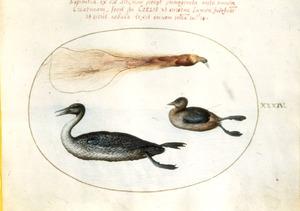 Twee eenden en een dode paradijsvogel