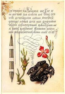 Franse roos, rietgras, violier en een pad