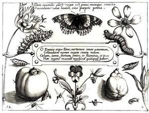 Vlinder, rupsen en poppen, twee vruchten en bloemen