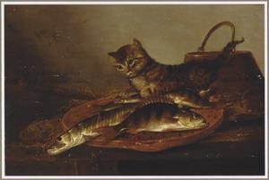 Visstilleven met een kat