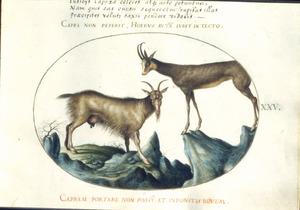 Twee geiten in een berglandschap