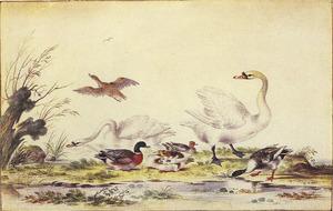 Zwanen en eenden aan de waterkant