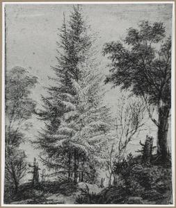 Boslandschap met naaldbomen