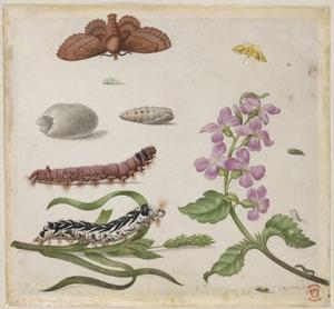 Violier, timoteegras en metamorfose van een vlinder