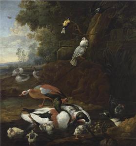 Eenden, ganzen en andere vogels in een landschap
