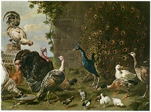 Hoenderhof met pauwen, een kalkoen en andere vogels
